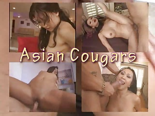 Asian Cougars Collection